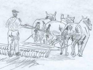 Farming Sketch Peninsula Pottery